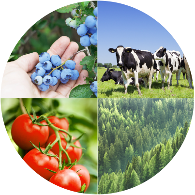 Livestock and Crop Insurance